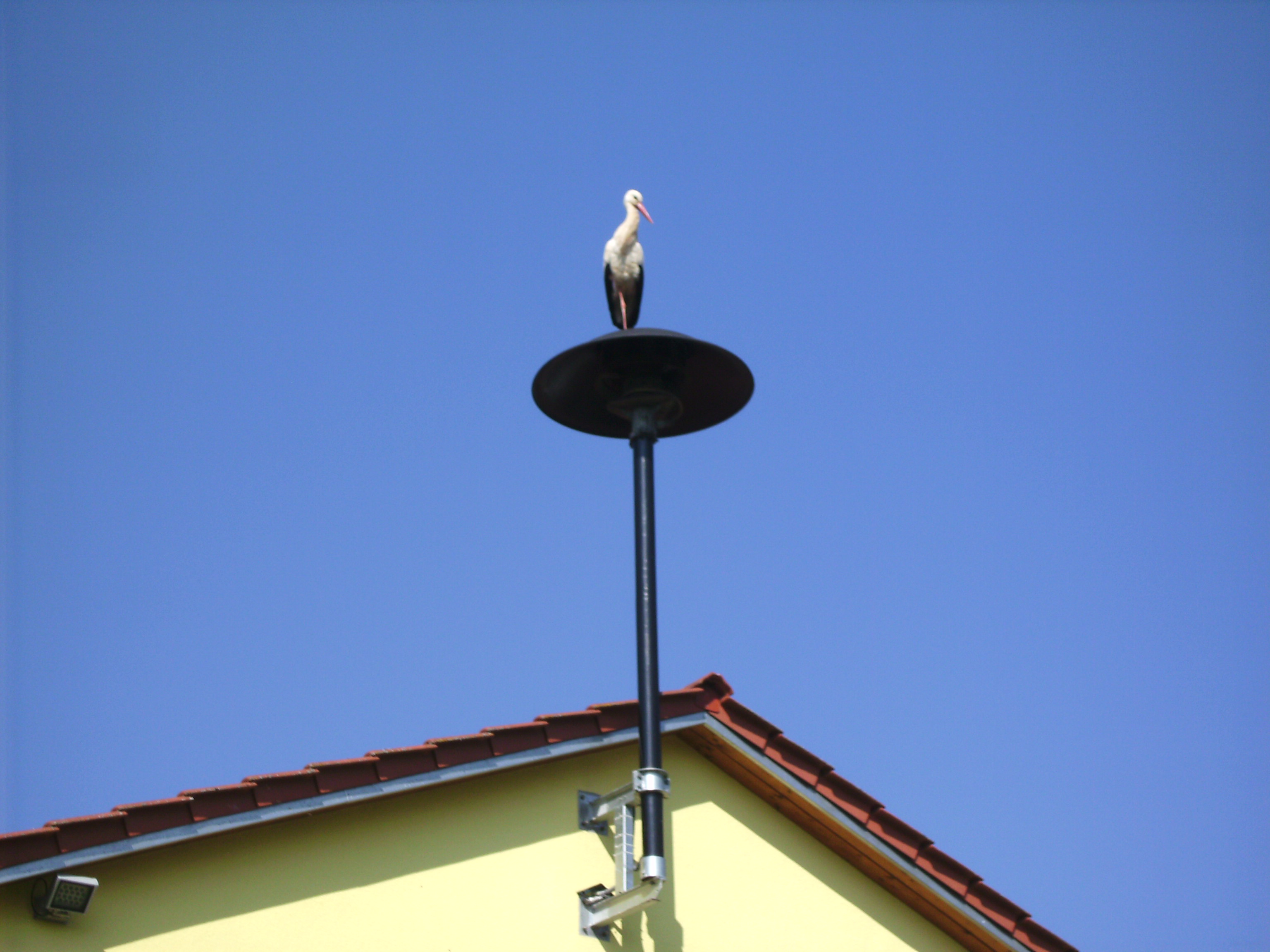 2014-03-29 - Storch am FW-Haus - 02